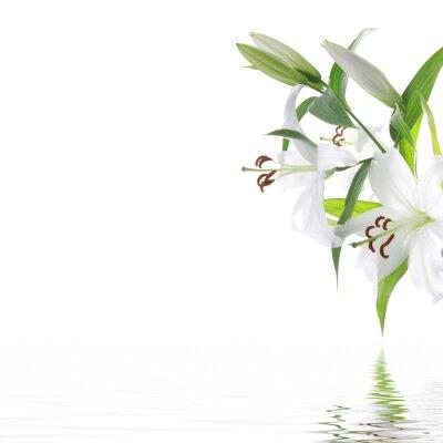 Obraz White lilia flower - SPA design background