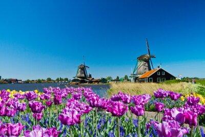 Obraz Wiatrak w Holandii