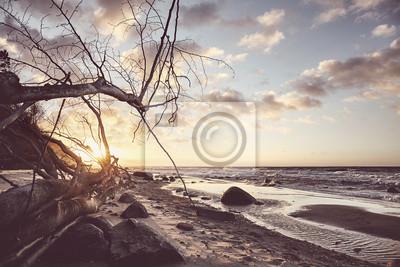 Widok na malowniczą plażę ze zwalonym drzewem o zachodzie słońca, zastosowano tonację koloru.