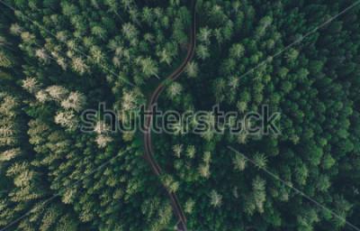 Obraz Widok z lotu ptaka droga po środku lasu