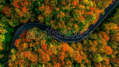 Obraz Widok z lotu ptaka gęsty las jesienią z drogowego przecinania