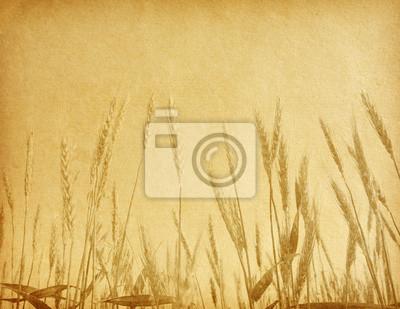 wieku tekstury papieru. Pole pszenicy.
