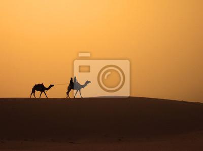 Obraz Wielbłądy spacerując po wydmie