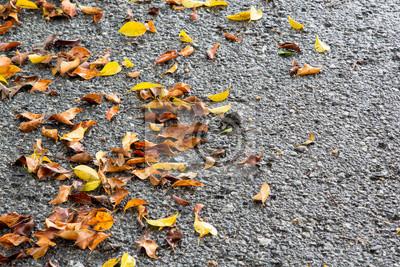 Wiele spadek liści na mokrej drodze asfaltowej w deszczowy dzień.