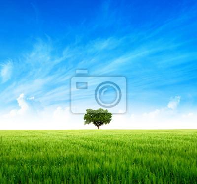 Wielkie drzewo na zielonym polu