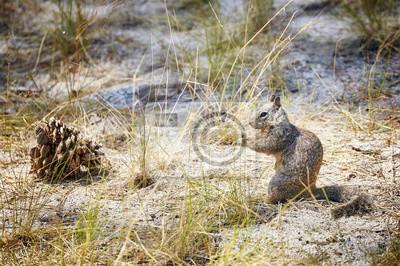Wiewiórka w Parku Narodowym Yosemite, Kalifornia, USA ..