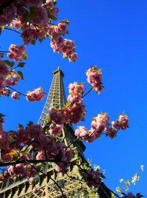 Obraz Wieża Eiffla w czasie wiosny, Paryż, Francja