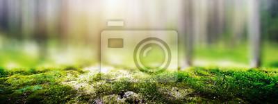 Obraz Wild forest panorama