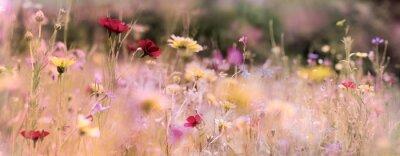 Obraz wildblumenwiese natur banner banner pastell