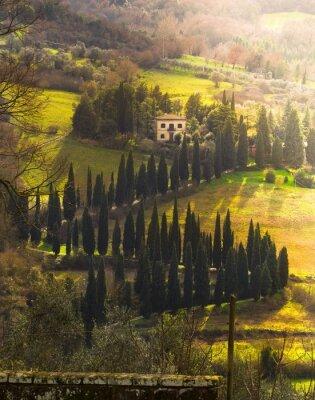 Obraz willa e Viale alberato, Toscana