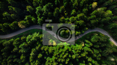 Obraz Winding road trough dense pine forest. Aerial drone view, top down