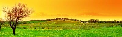 Obraz winnica panoramiczny świeży