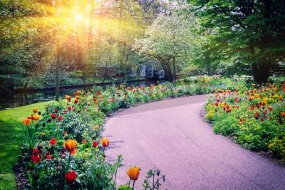 Obraz Wiosna krajobraz z kolorowych tulipanów. Keukenhof, Holandia ogrodowe