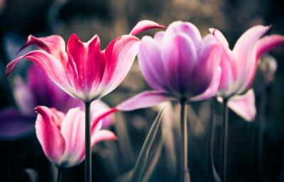 Obraz wiosna, ogród, kwiaty, świeże