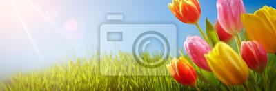 Obraz Wiosna tulipany w dziedzinie
