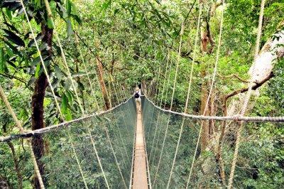 obraz wiszący most linowy w dżungli na wymiar kobieta