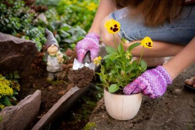 Obraz Womans hands planting yellow flowers in the garden