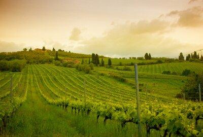 Obraz Wschód słońca nad winnicami, Toskania, Włochy