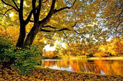 Obraz Wspaniały dzień jesienią w cichym jak :)