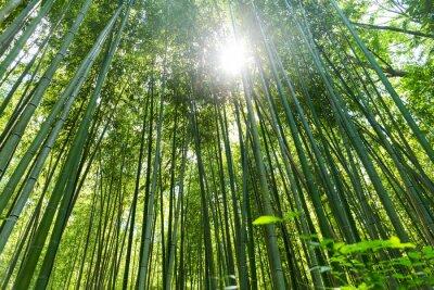 Obraz Wysoka Bambus lesie
