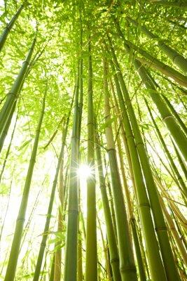 Obraz Wysokie Bambusstämme