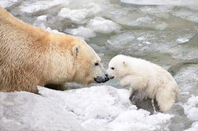 Obraz Медведица с медвежонком.