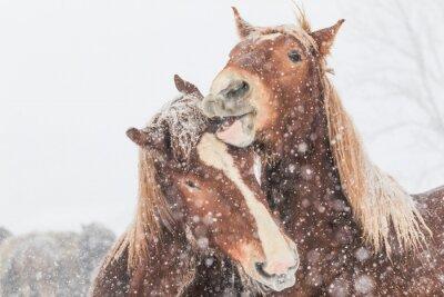 Obraz 冬 の 馬