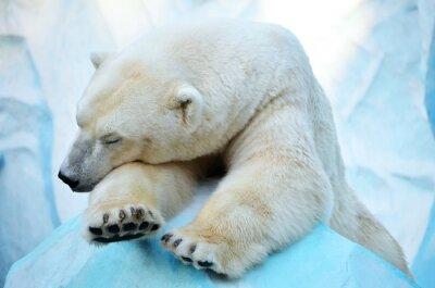 Obraz Спящий медведь.