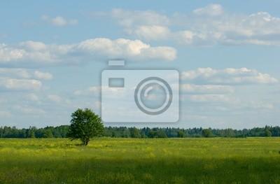 samotne drzewo standind w dziedzinie thу