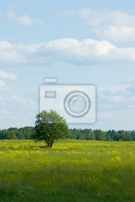 samotne drzewo standind w thу dziedzinie