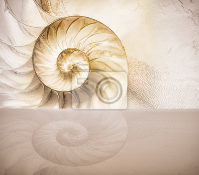 Сut away of a chambered nautilus shell, mother of pearl shell, popular cephalopod.