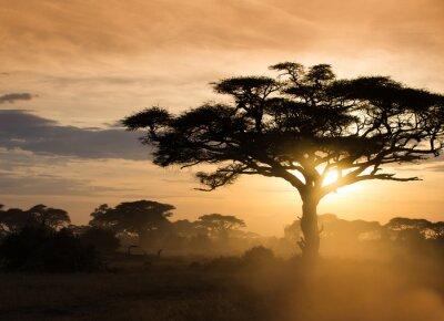 Obraz Zachód słońca na afrykańskiej sawannie