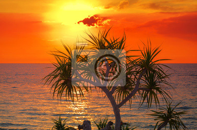 Zachód słońca na plaży z drzewa sylwetka.