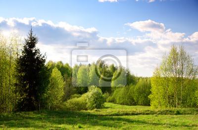 zachód słońca na wiosnę lasu