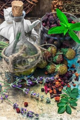 Obraz Zakres są zbierane i suszone zioła lecznicze i rośliny w ziołolecznictwie.