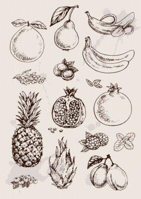 Obraz zbiór owoców ręcznie rysunku izolowane