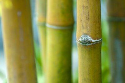 Zen bamboo .