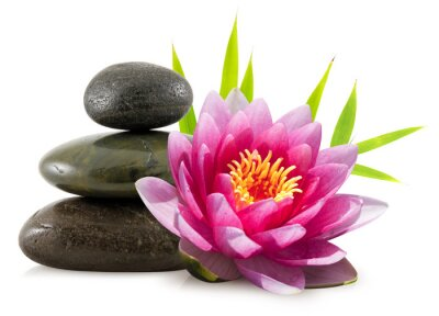 Zen skład, kamienie, bambus i lotus