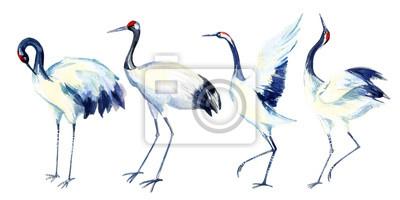 Zestaw akwareli dźwig azjatyckiego ptaka