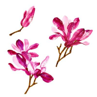 Obraz Zestaw czerwonych kwiatów magnolii akwarela