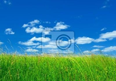 zielona trawa i błękitne niebo w tle