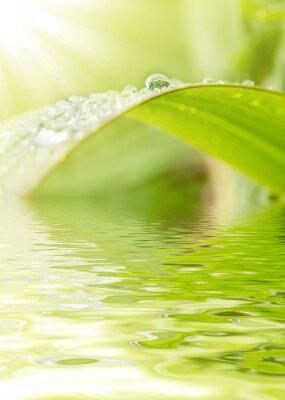 Zielona trawa w tle kropel deszczu