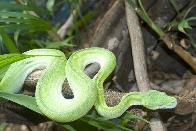 Obraz zielone drzewa python