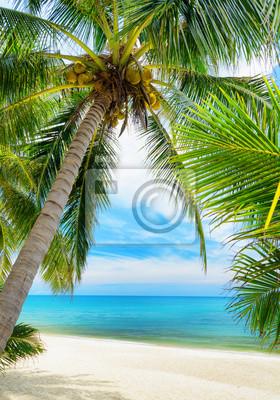 Obraz Zielone drzewo na białym piasku plaży