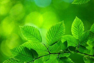 zielone liście