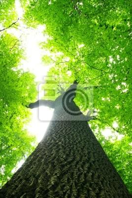 Obraz zielone liście
