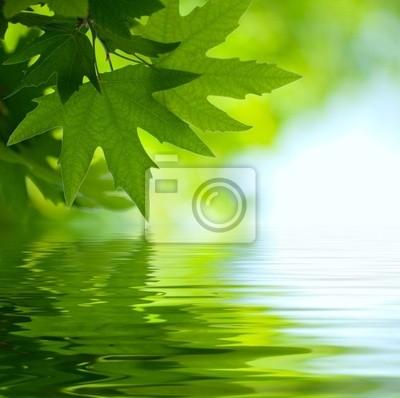 zielone liście, odzwierciedlając w wodzie, płytkie fokus
