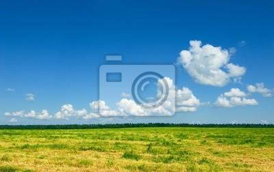 zielone pola i niebieskiego nieba