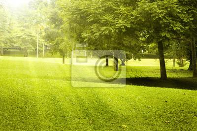 Zielone pole krajobraz z porannym słońcu