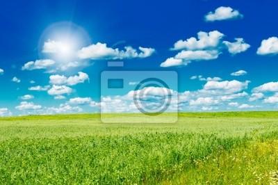 zielone pole z kwitnących kwiatów i błękitne niebo